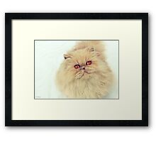 Who are you calling a big ball of fur?  Framed Print