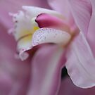pink orchid by Nicole W.