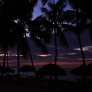 Palm Tree Delight by Steve Small