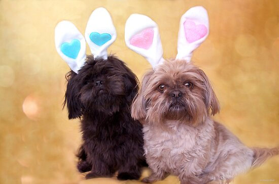 Easter Doggies  by Nicole  Markmann Nelson