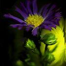 Purple Flower by Nicole  Markmann Nelson
