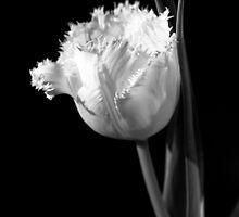 Mono tulip  by unit8