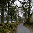 Country Lane on Dartmoor by lezvee