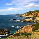 Bodega Head by Barbara  Brown