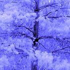 Blue Spring 1 by kahoutek24