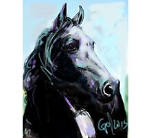 Horse, painted black Photographic Print