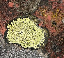 tile life: biodiversity by yvesrossetti
