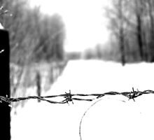 Frosted Barbed Wire  by mhnatiuk