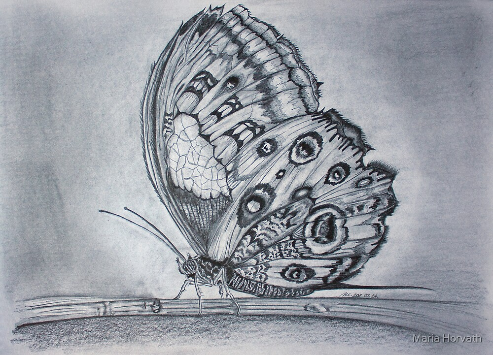Butterfly by Maria Horvath