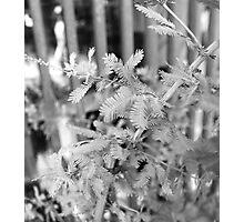Fragile Photographic Print