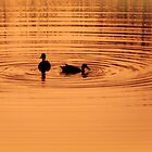 Ducks at sunset by Robin Simmons