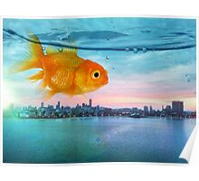 goldfish sunrise Poster