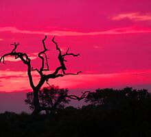The natural colors of an african sunset by jozi1