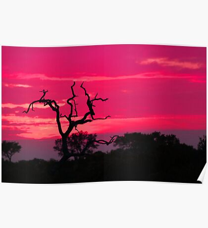 The natural colors of an african sunset Poster