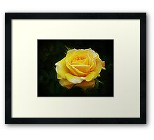 Spec's Yellow -  Beautiful  Framed Print