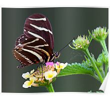 A neighborly butterfly Poster