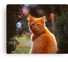 My Wife's Cat Canvas Print