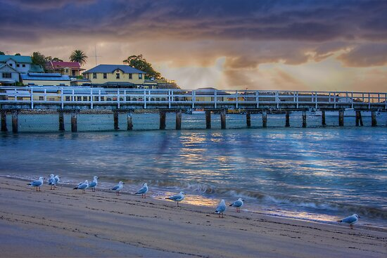 Seagulls like sunrises too by Chris Brunton