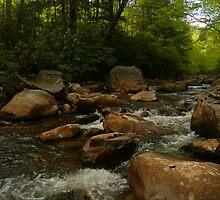 Tea Creek Rapids by Chad Burrall