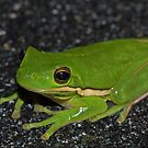 Green Treefrog  by Michael L Dye