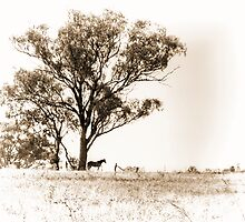 Lone horse by Chris Brunton
