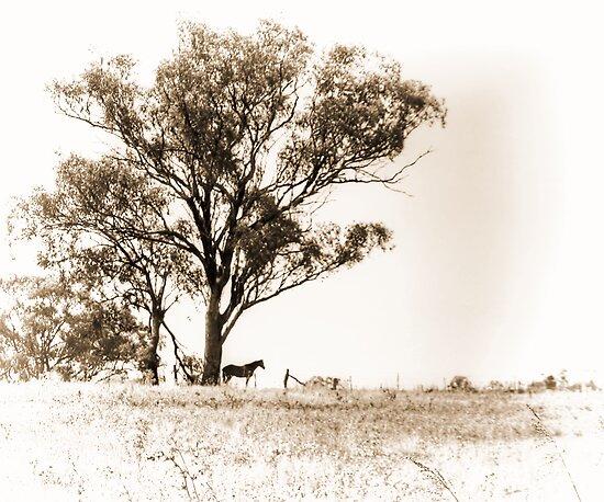Lone horse by Chris Brunton