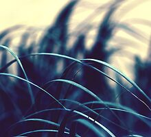 Grass  by Joey Kuipers