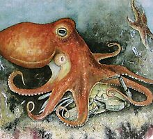 Octopus by ricksilverfish