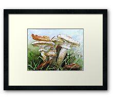 Destroying Angel Fungi Framed Print