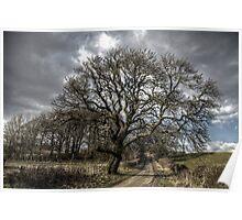 Rural Tree Poster