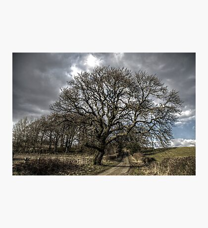 Rural Tree Photographic Print