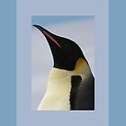 Penguin Portrait by Catherine Hamilton-Veal  