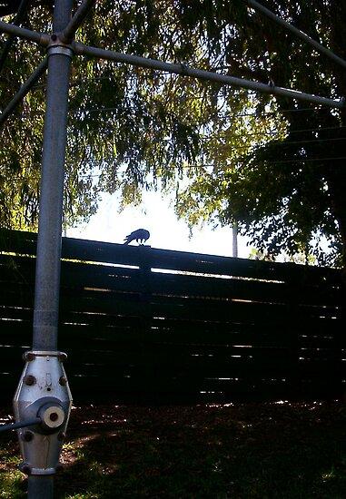 Vaguely Street Level Tough Guys' Massive Predatory Crow by Robert Phillips