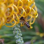 Bee with Pollen  by lib225