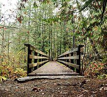 Bridge by Amanda McHady