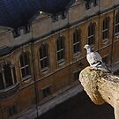 A Different View of Oxford by Irina Chuckowree