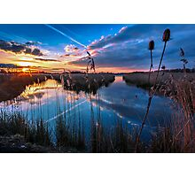 Reeds and Reflections Photographic Print