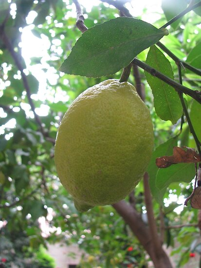 Limon by rasim1