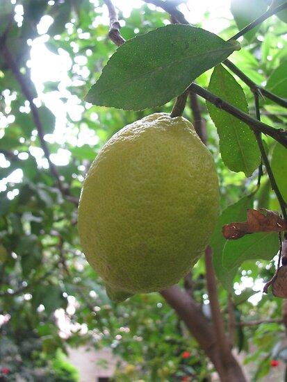 Limon by rasim1