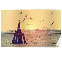 Seagulls at the sea Poster