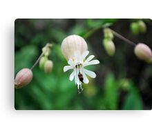 small flower with insect Canvas Print