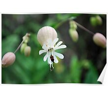 small flower with insect Poster