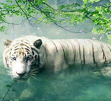 Lonely Tiger 2 by Nicolene van Staden
