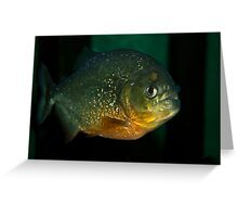 Lone piranha Greeting Card