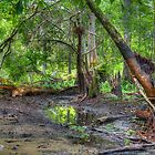 Loxahatchee River 6 by Michaela Kopecka