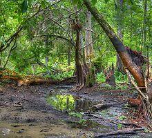 Loxahatchee River 6 by Michaela Kopecka