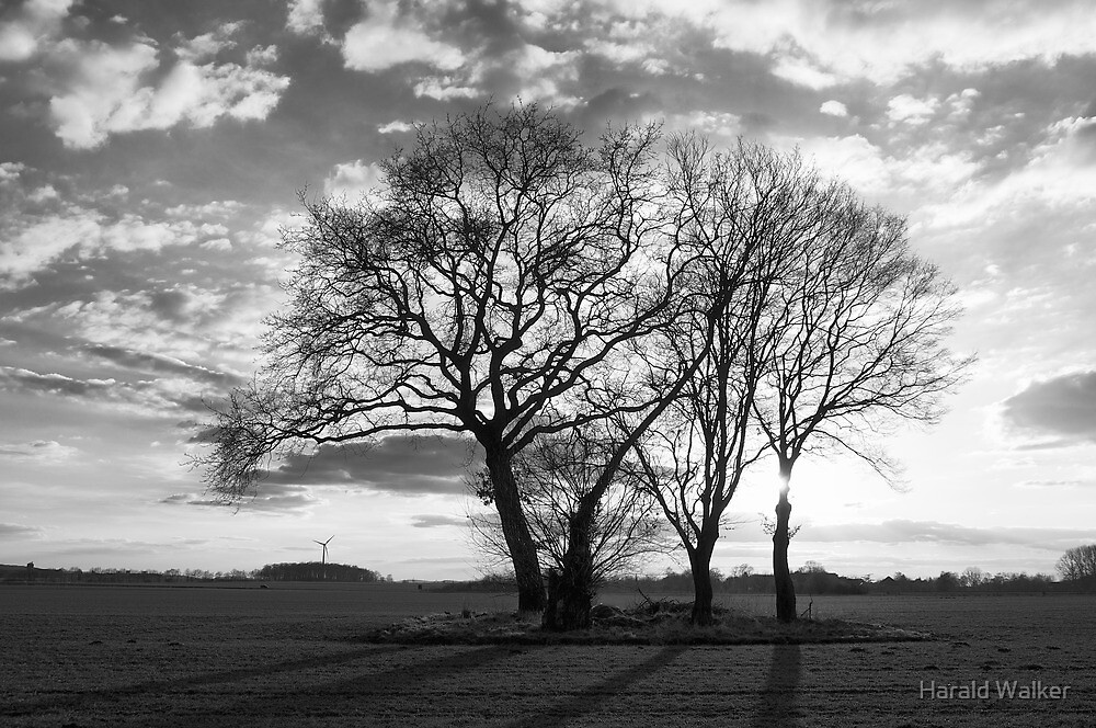 Tree group in the sunset by Harald Walker