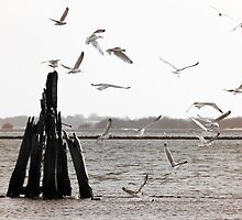 Seagulls at the sea - duotone by Richard Eijkenbroek