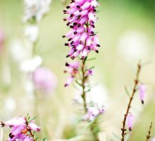 I love the sound of the breeze blowing through the heather... by Gregoria  Gregoriou Crowe