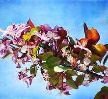 Spring in Bloom~just not here by vigor
